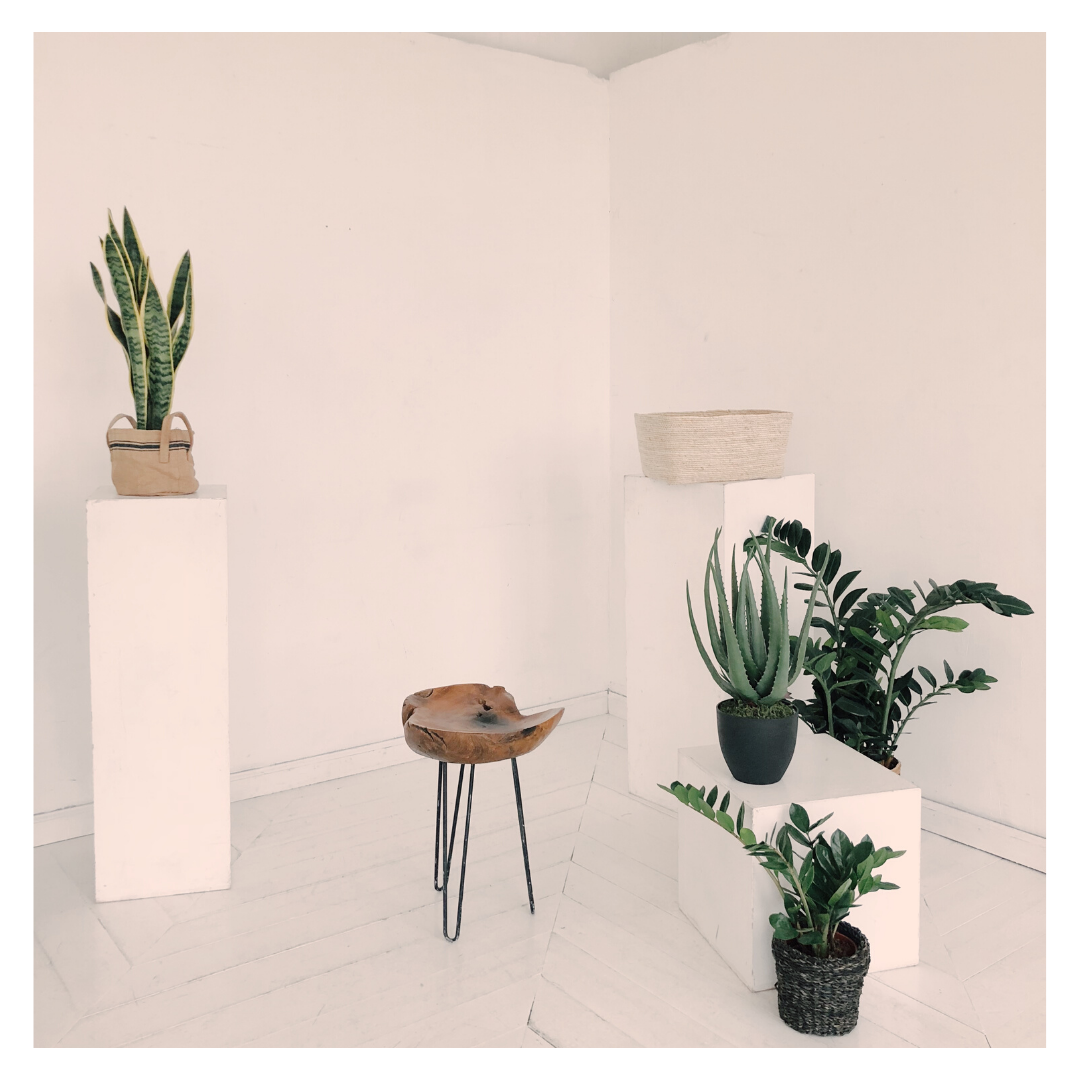 7 WAYS TO ADD VALUE TO YOUR SPACE WITH PLANTS INDOOR
